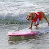 Hugsley_2016-03-06_Noosa_Surfing Dog Spectacular_75.JPG