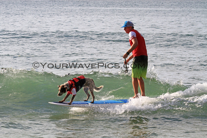 2016-03-06_Noosa_Surfing Dog Spectacular_107.JPG