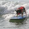 Pepper_2016-03-06_Noosa_Surfing Dog Spectacular_108.JPG