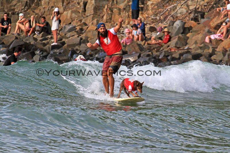 A_2016-03-06_Noosa_Surfing Dog Spectacular_28.JPG