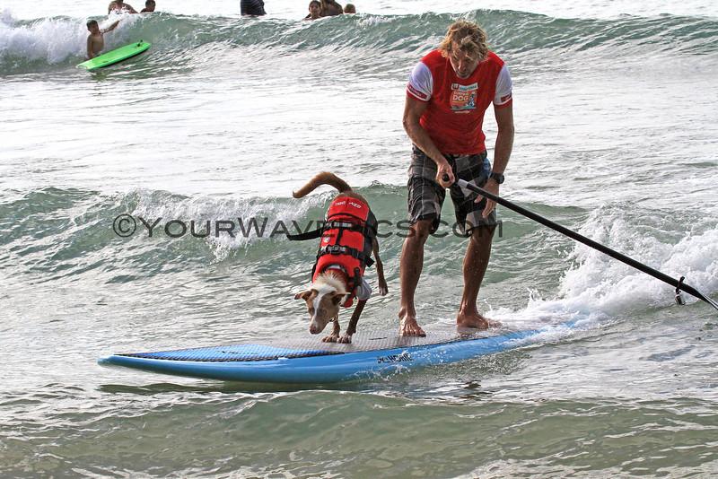 Chris_deAboitiz_Rama_2016-03-06_Noosa_Surfing Dog Spectacular_33.JPG