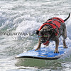 Pepper_2016-03-06_Noosa_Surfing Dog Spectacular_63.JPG