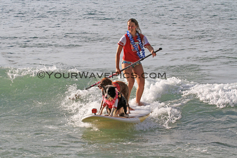 Indie_Anna_2016-03-06_Noosa_Surfing Dog Spectacular_100.JPG