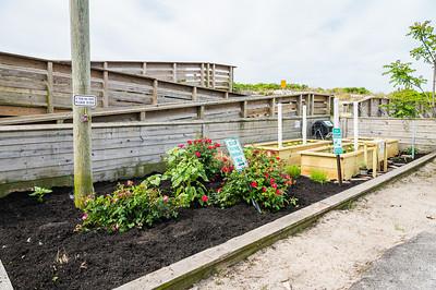 20210601-Surfrider Foundation Ocean Friendly Garden _Z623975