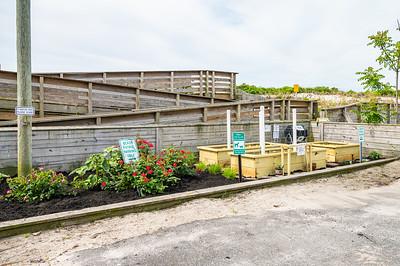20210601-Surfrider Foundation Ocean Friendly Garden _Z623970
