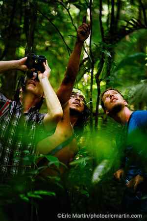 SURINAME.  EXCURSION A TRAVERS LA FORET AMAZONIENNE AVEC UN GUIDE AMERINDIEN DU VILLAGE DE PALUMEU POUR ESCALADER L INSELBERG DE POTIHILL QUI SURPLOMB LA CANOPÉE                             SITUÉ EN PLEINE JUNGLE AMAZONIENNE LE VILLAGE AMERINDIEN DE PALUMEU ACCUEILLE QUELQUES RARES TOURISTES DANS UN PETIT LODGE GÉRÉ PAR LA COMMUNAUTÉ: LE PALUMEU JUNGLE LODGE.