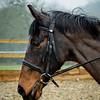 Rider 6-0239