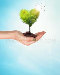 Holding a heart tree