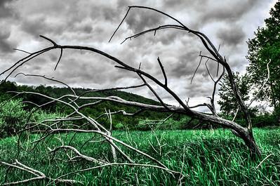 Branch in Field