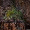 Crystal Mine Rock Garden, Pam's Blue Ridge