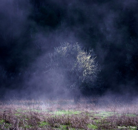 Tree in fog, Devil's Gulch