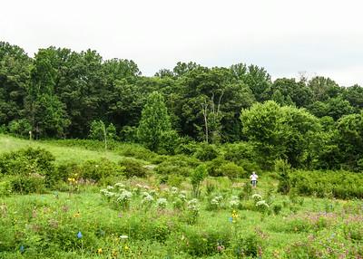 Field at Jones Preserve