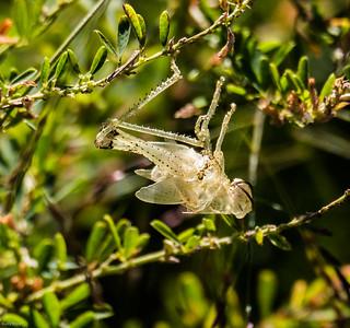 Exoskeleton near Grasshopper No. 1
