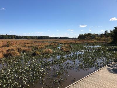 Neabsko Creak Freshwater Wetland