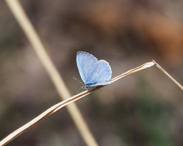Spring Azure 1 - Dorsal