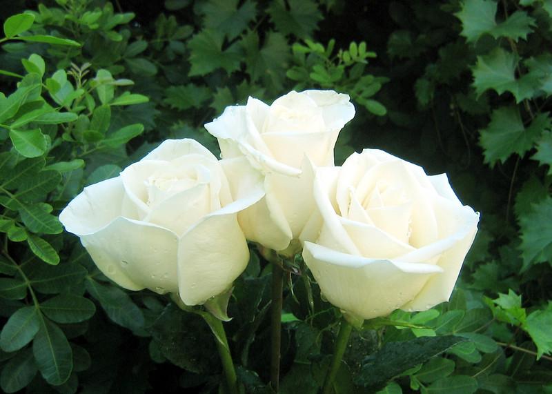 print-roses-bouquet-3488