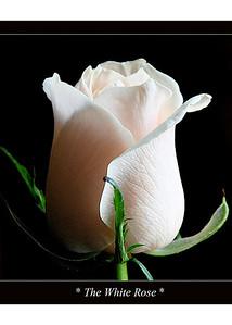 1-rose-print