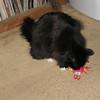 Santa did reward Blackie with a couple of feather covered toys, which she loved...nearly to death. :-)