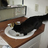 Last drink at the old sink. Wait until she sees the new faucet....!?!