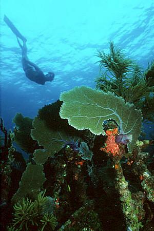 Snorkeling the Civil War Wreck, Key Largo