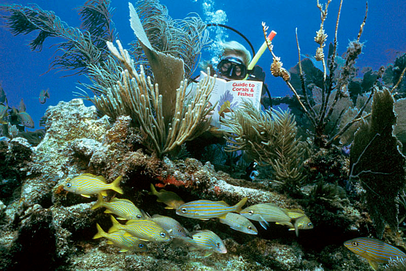 Guide to Corals and Fishes:  Key Largo, FL