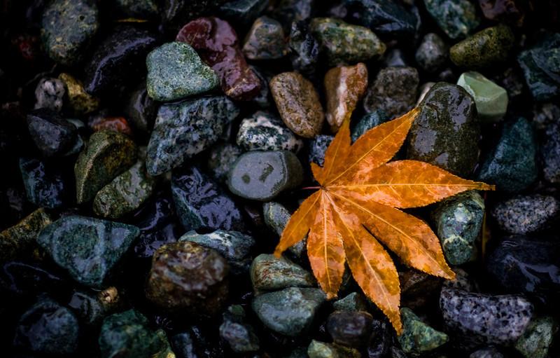 Leaf on wet stones - Kamakura