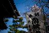 details - Kamakura
