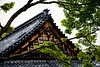 Temple roof and bird - Kyoto