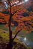 Arashiyama Gold - Kyoto