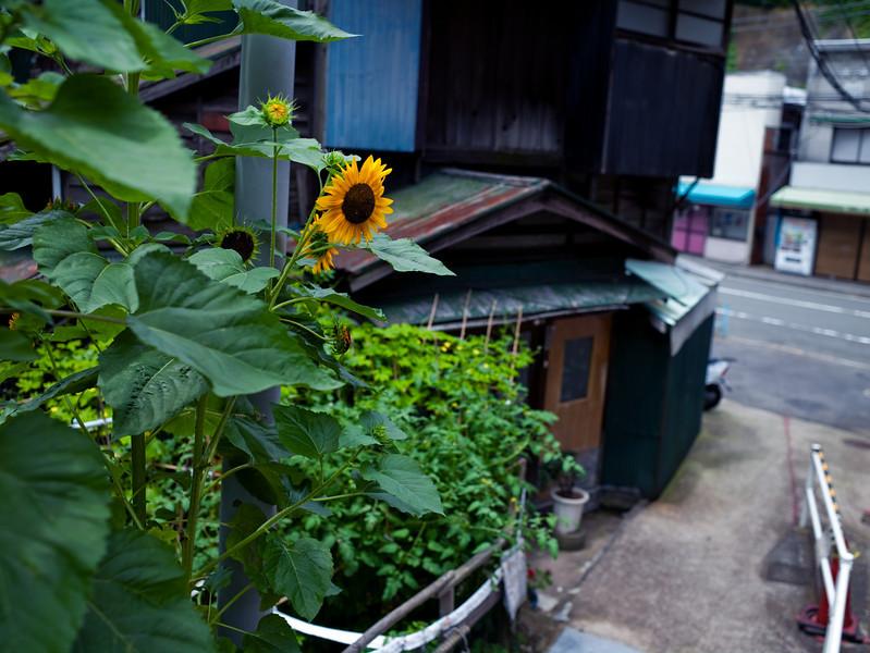 Summer garden - Yokosuka