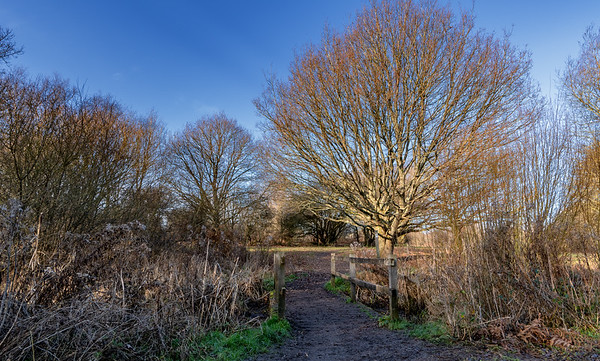 Ditchling Common -11