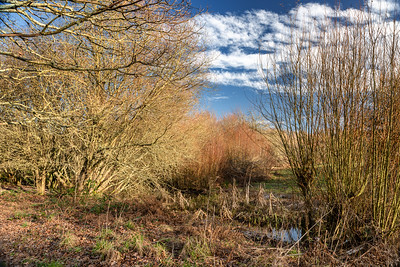 Ditchling Common -17