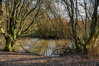 Ditchling Common-18