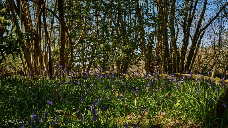 Spring in Butchers Wood-6993 - 3-24 pm