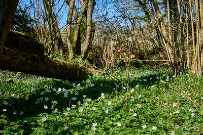 Spring in Butchers Wood-6989 - 3-21 pm