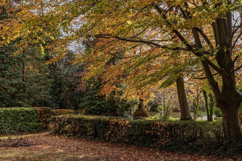 Autumn Colour on Remembrance Sunday