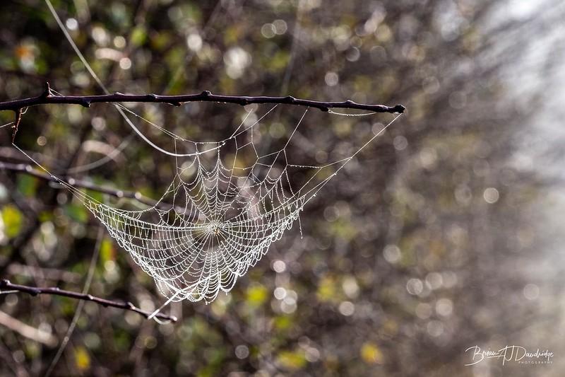 Hassocks in the mist-5373-Edit