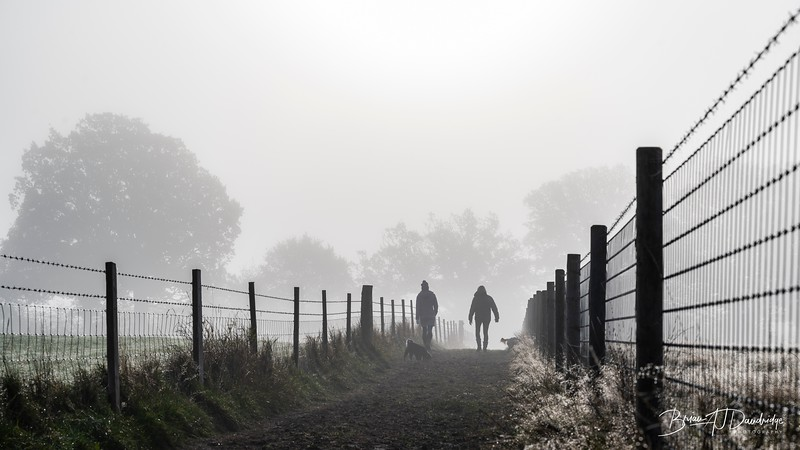 Hassocks in the mist-5411