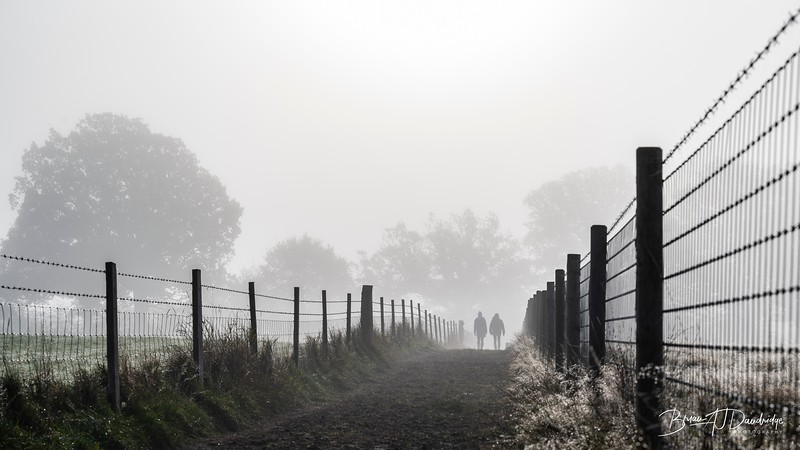 Hassocks in the mist-5423