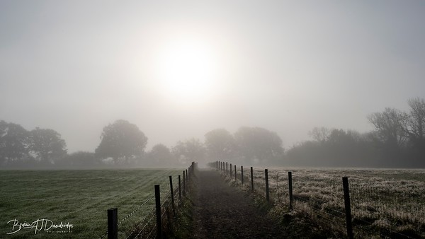 Hassocks in the mist-5447