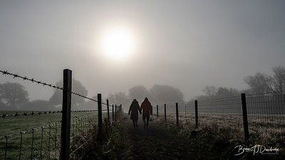 Hassocks in the mist-5448