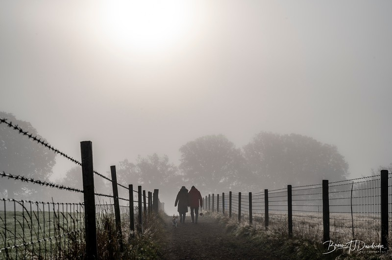Hassocks in the mist-5452