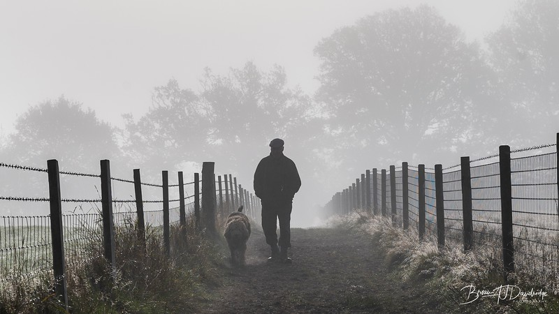 Hassocks in the mist-5439