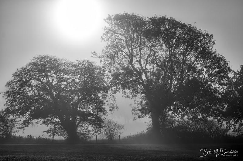 Hassocks in the mist-5364-Edit
