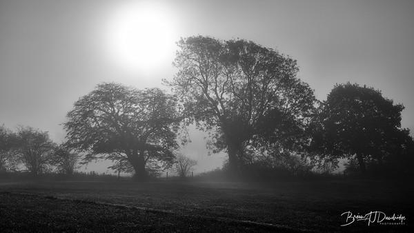 Hassocks in the mist-5361-Edit