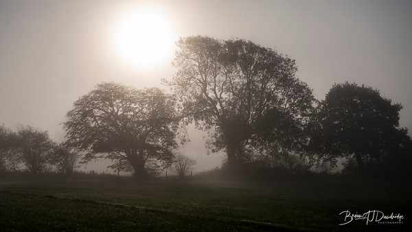 Hassocks in the mist-5361