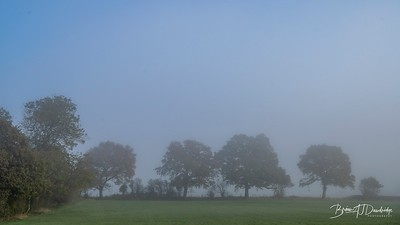 Hassocks in the mist-5444