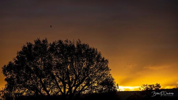 Hassocks Sunrise-6092