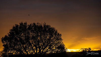 Hassocks Sunrise-6092