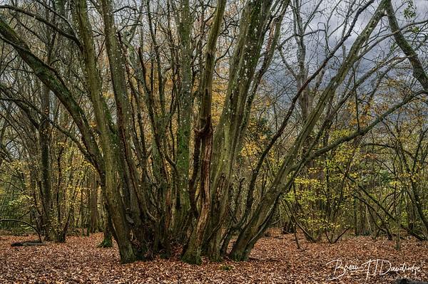 Butchers Wood-6246-Edit
